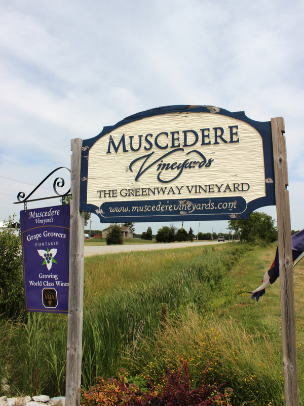 Muscedere Vineyards logo